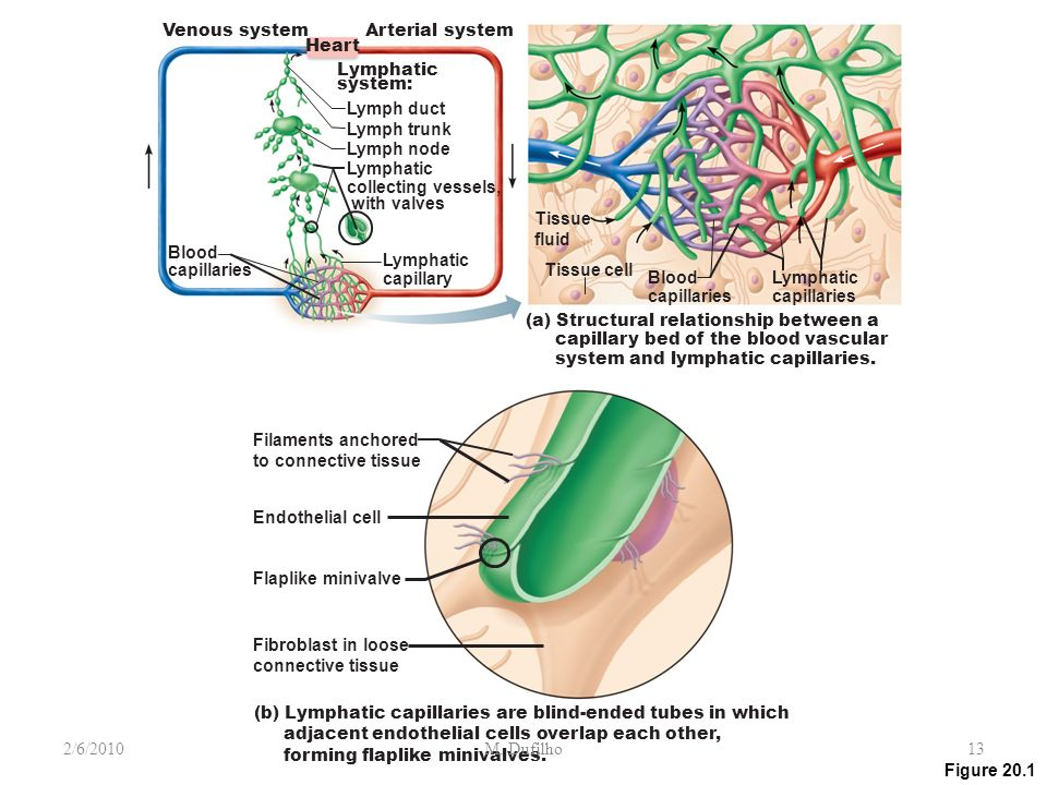 relationship between the structure of arteries veins and capillaries