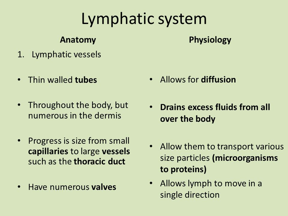 Großartig Anatomy And Physiology Lymphatic System Study Guide Fotos ...