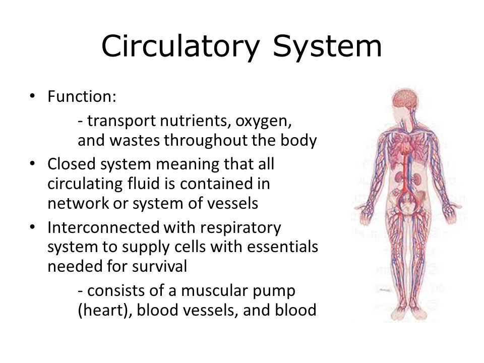 circulatory and respiratory systems - ppt video online download, Human Body