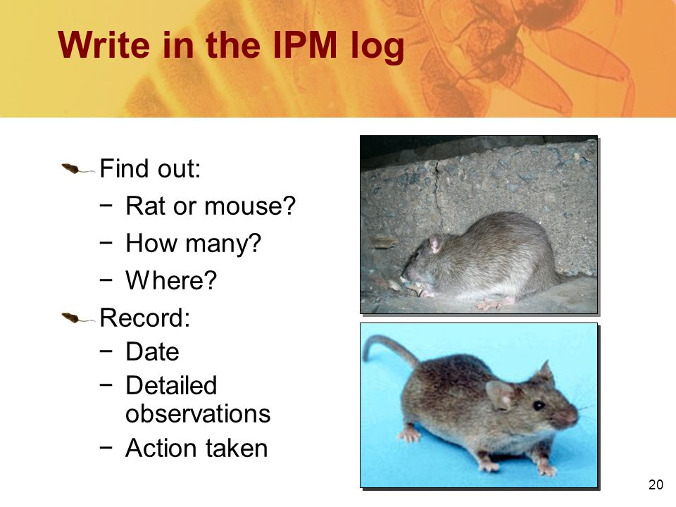 how to write out an ipm