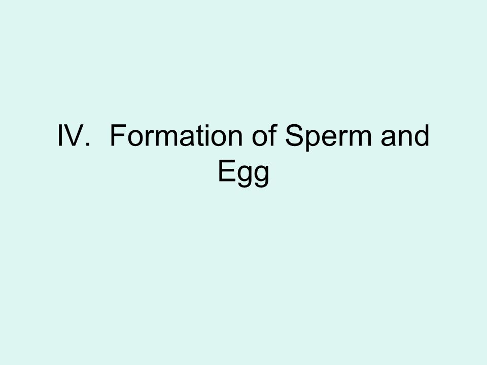 formation sperm
