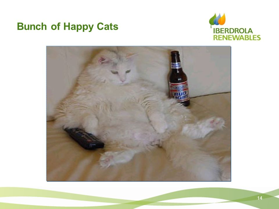 Bunch of Happy Cats