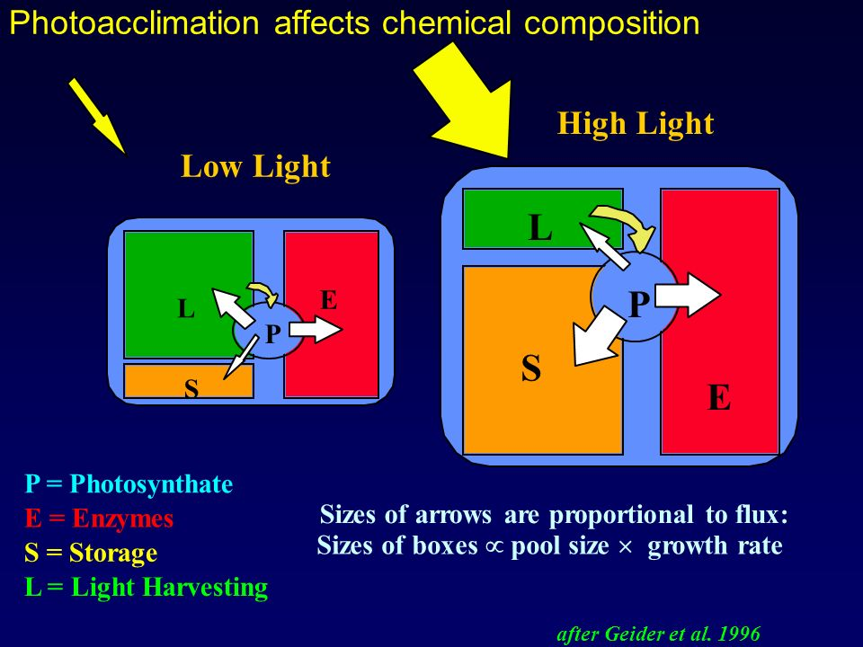 Photoacclimation affects chemical composition