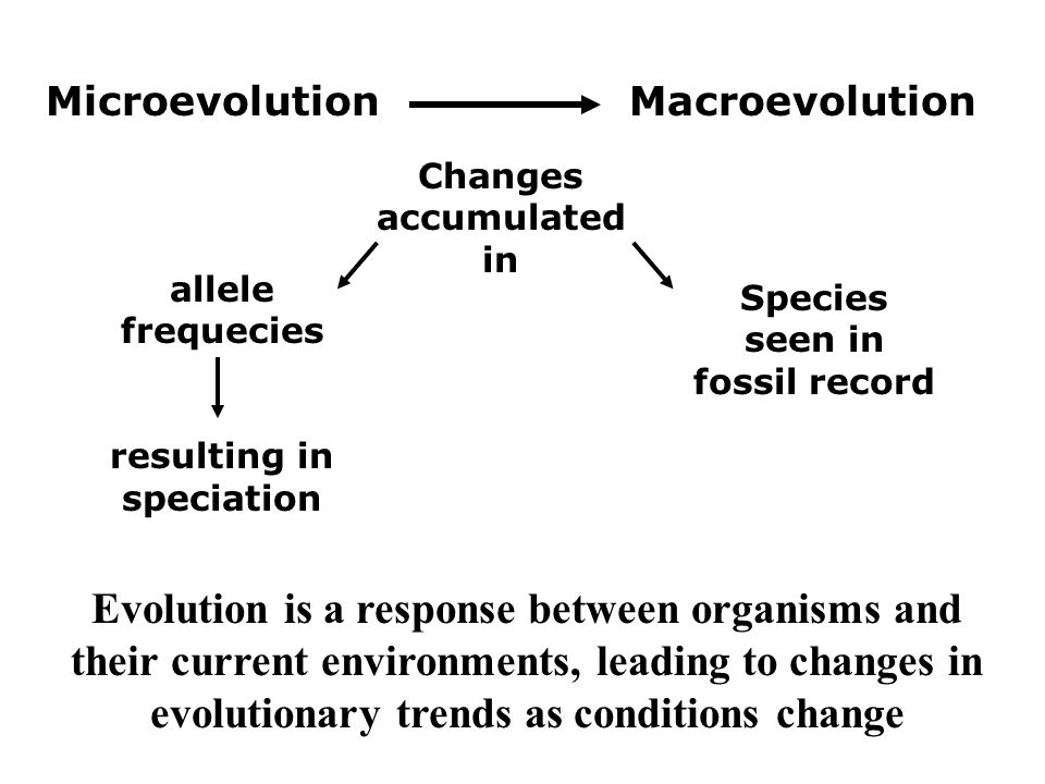 Evolution : Glossary