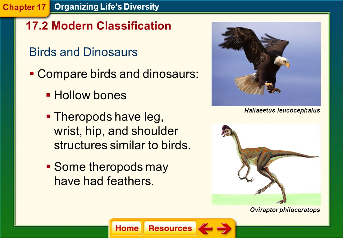 Compare birds and dinosaurs: