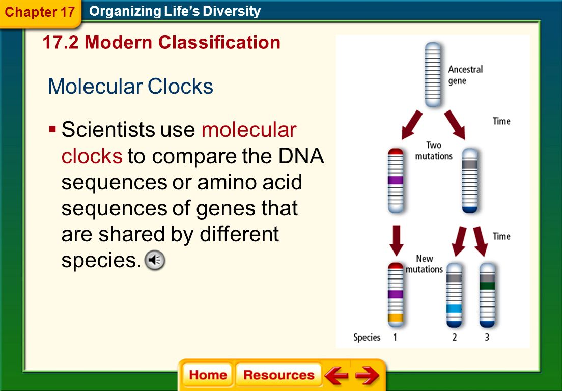 Chapter 17 Organizing Life's Diversity. 17.2 Modern Classification. Molecular Clocks.
