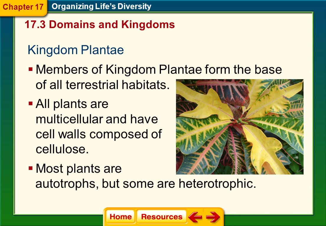 Members of Kingdom Plantae form the base of all terrestrial habitats.