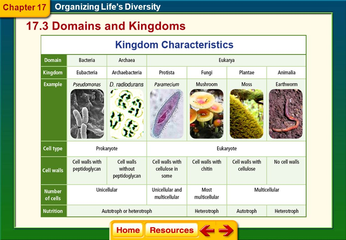 Chapter 17 Organizing Life's Diversity 17.3 Domains and Kingdoms
