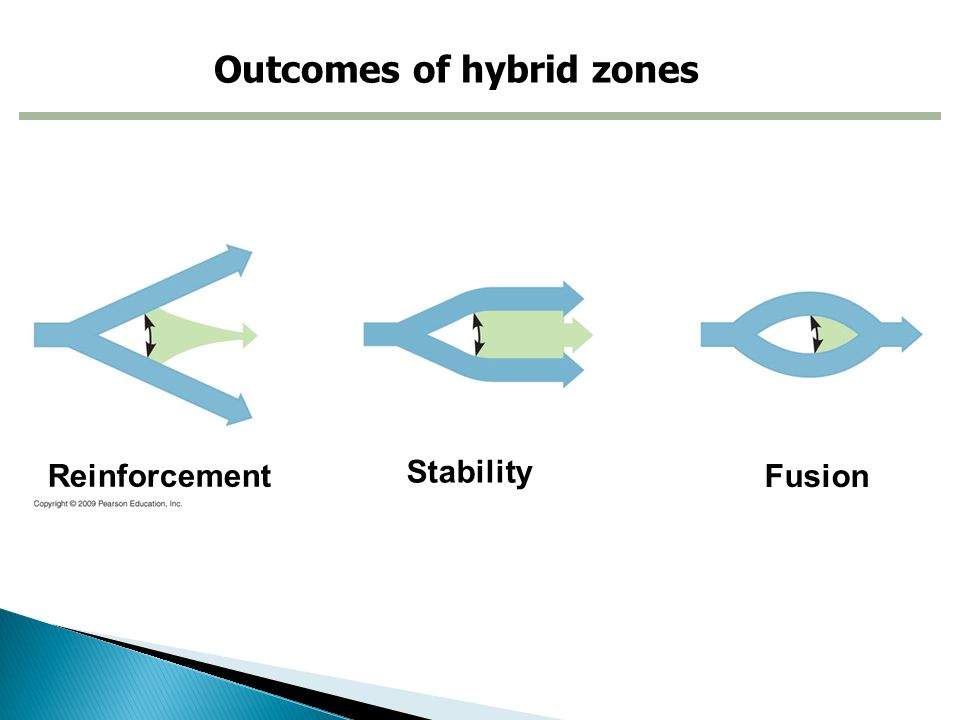 Outcomes of hybrid zones