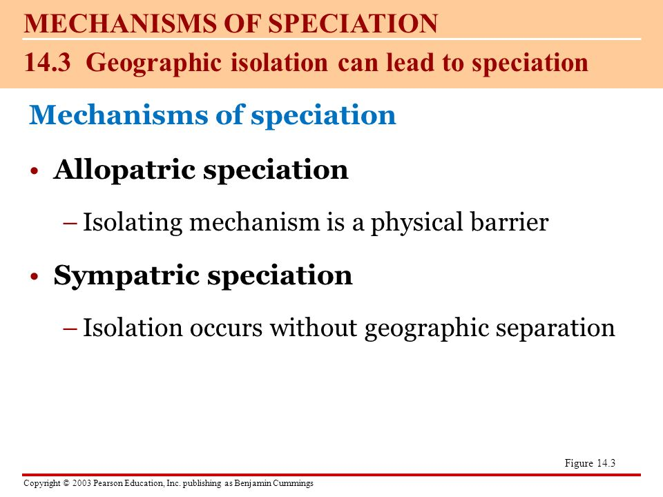 the importance of geographic isolation essay Free speciation papers, essays  the importance of geographic isolation - although darwin and mayr both contributed enormously to the topic of speciation.