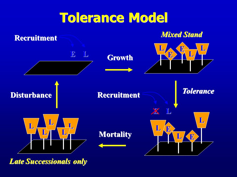 Tolerance Model E L Mixed Stand E L Recruitment Growth Disturbance