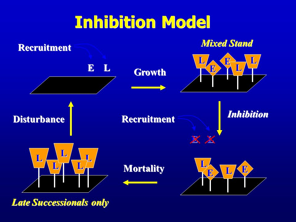Inhibition Model E L Mixed Stand E L Recruitment Growth Disturbance
