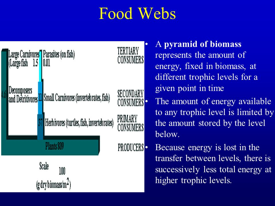 Food Webs A pyramid of biomass represents the amount of energy, fixed in biomass, at different trophic levels for a given point in time.