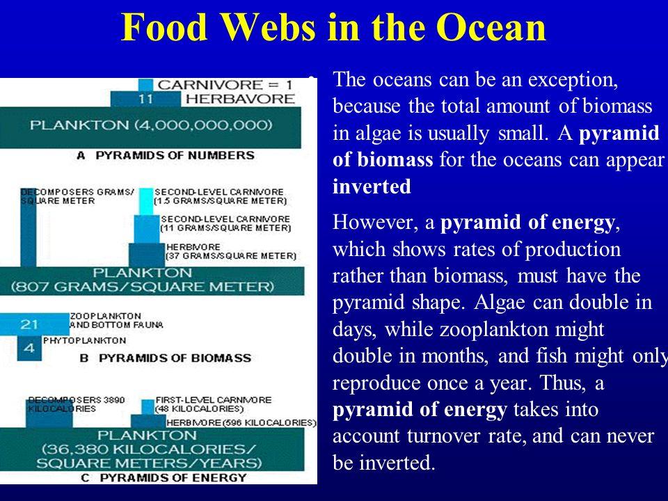 Food Webs in the Ocean