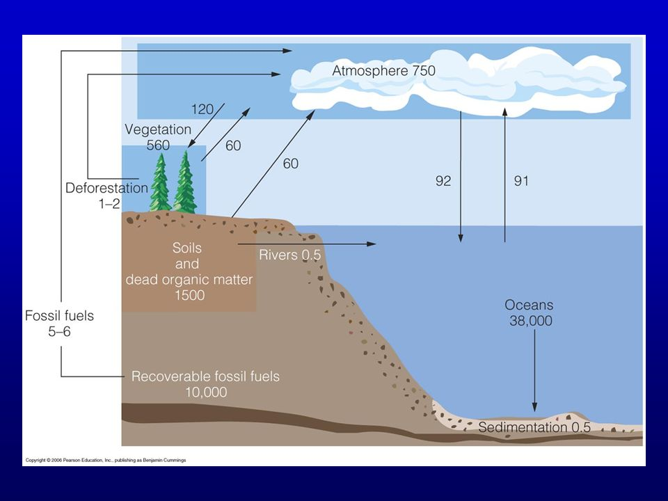 Figure 22.5 The largest pool in rocks is not shown. In oceans, CO2 is mostly as bicarbonate and carbonate ions.