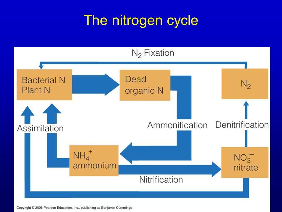 The nitrogen cycle Figure 22.6