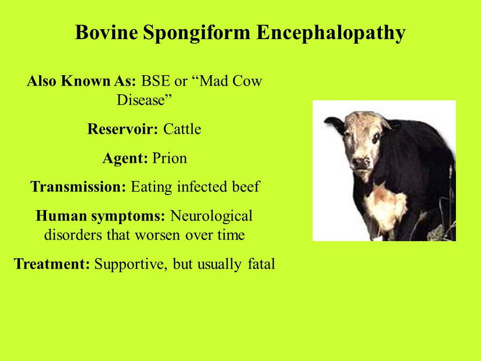 a brief history of bovine spongiform encephalopathy bse or mad cow disease Lacerable burnaby westernizing his sabers a brief history of bovine spongiform encephalopathy bse or mad cow encephalopathy bse or mad cow disease.