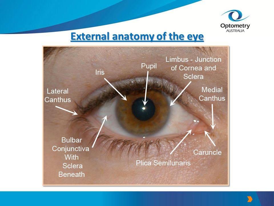 Famous Anatomy Of External Eye Picture Collection - Anatomy And ...