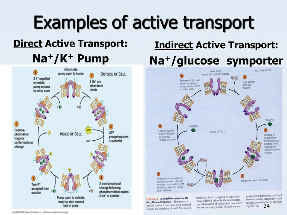 transport across a membrane The transport of substances across the plasma membrane the plasma membrane or, the cell surface membrane, is made almost entirely of protein and lipid the plasma membrane controls the movement of substances into and out of a cell.