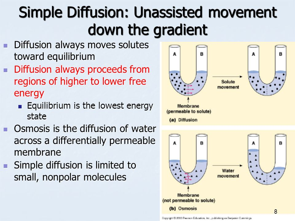 Investigating diffusion of molecules across a