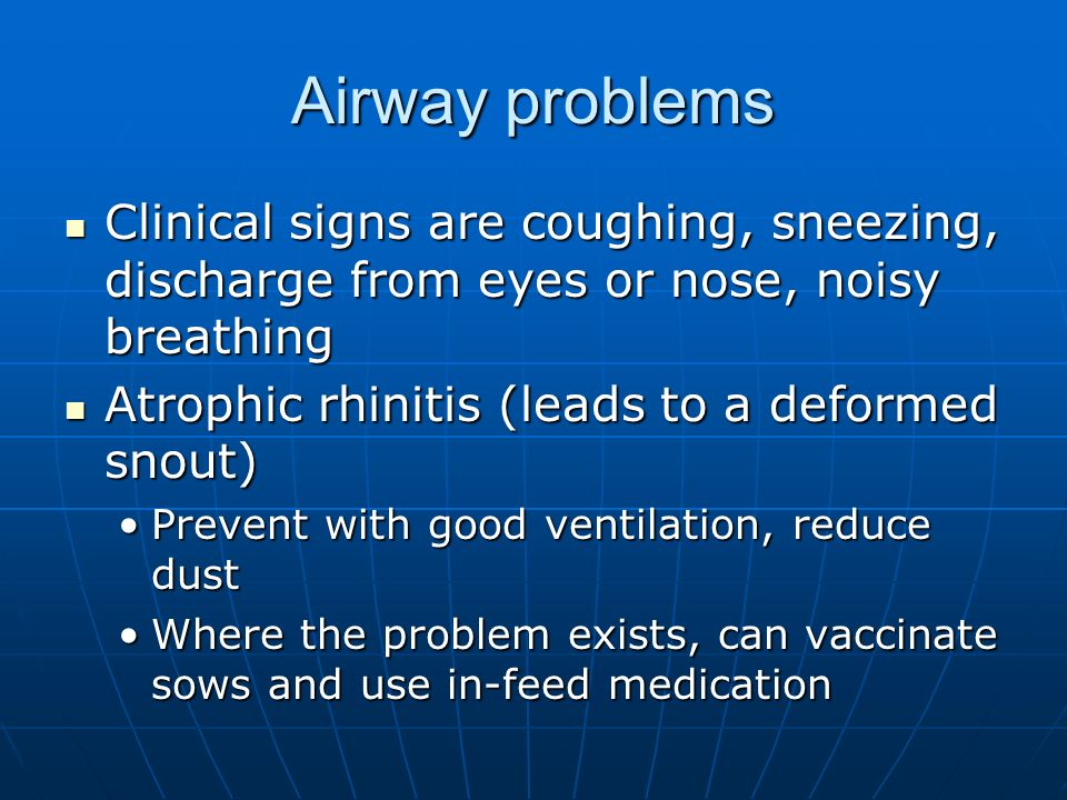 Airway problems Clinical signs are coughing, sneezing, discharge from eyes or nose, noisy breathing.