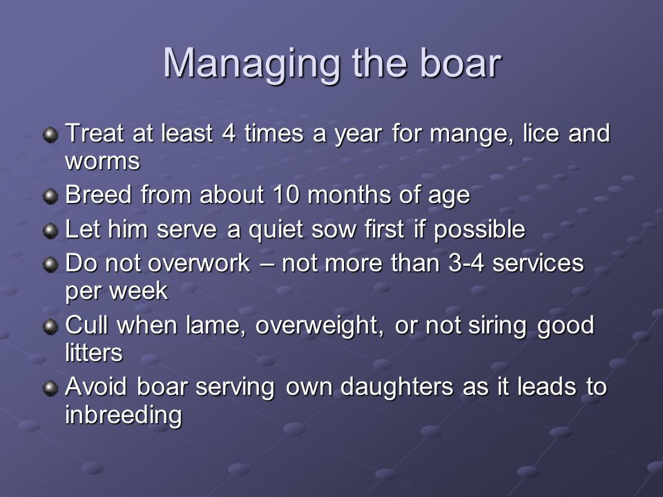 Managing the boar Treat at least 4 times a year for mange, lice and worms. Breed from about 10 months of age.