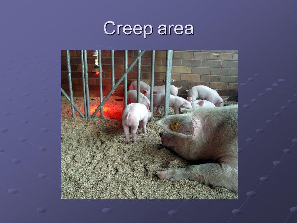Creep area