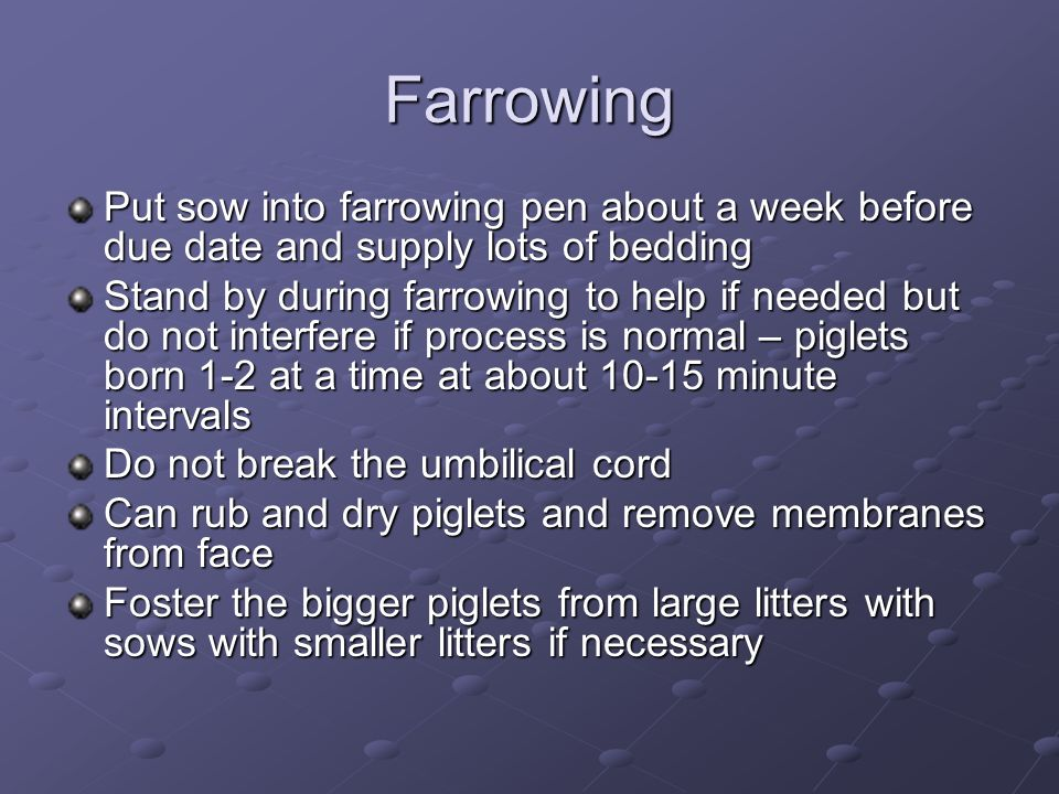 Farrowing Put sow into farrowing pen about a week before due date and supply lots of bedding.