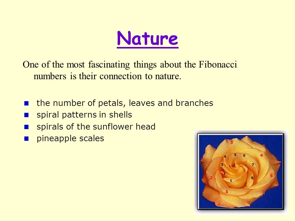 Nature One of the most fascinating things about the Fibonacci numbers is their connection to nature.