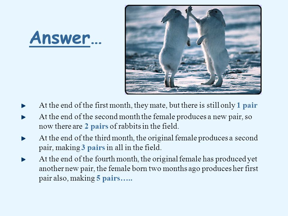 Answer… At the end of the first month, they mate, but there is still only 1 pair.