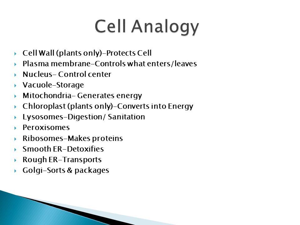 mitochondria analogy
