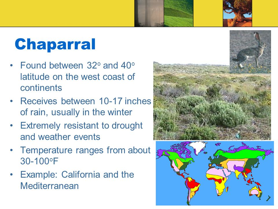 Chaparral Found between 32o and 40o latitude on the west coast of continents. Receives between inches of rain, usually in the winter.