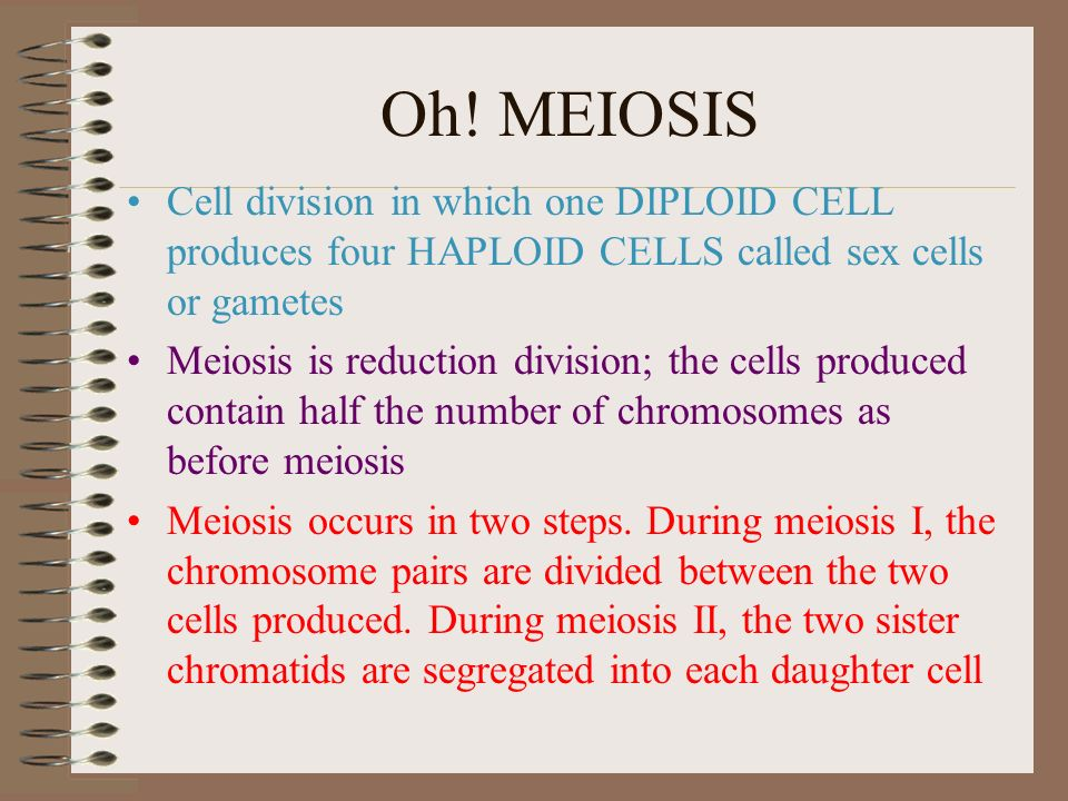 Are sex cells haploid or diploid galleries 13