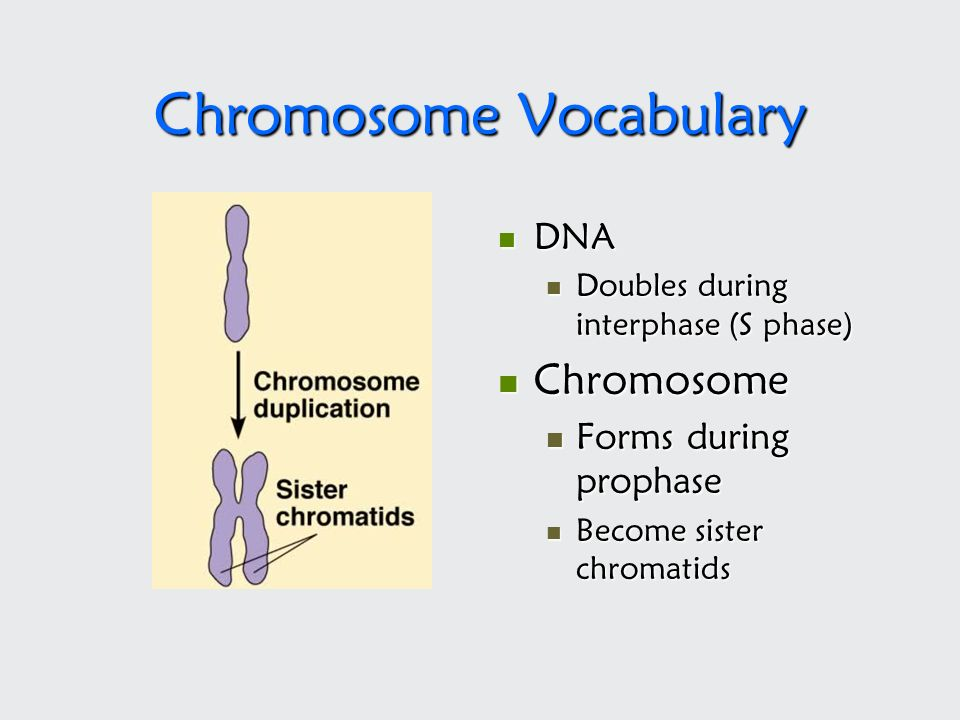 Chromosome Vocabulary
