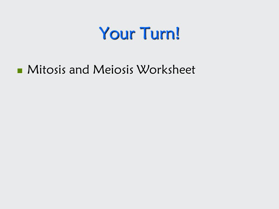 Your Turn! Mitosis and Meiosis Worksheet