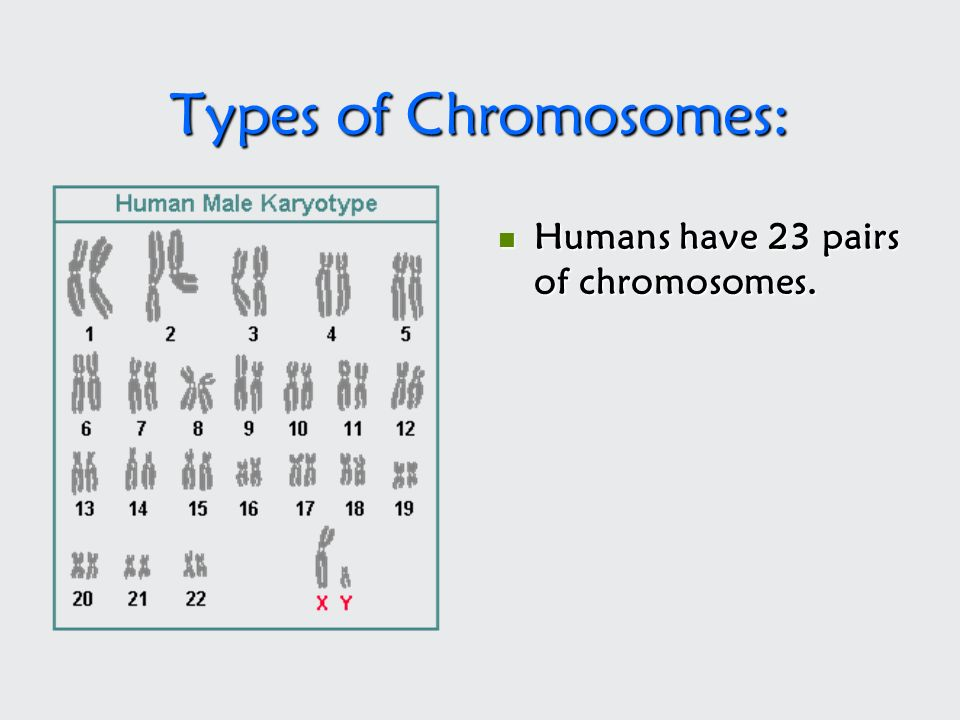 Types of Chromosomes: Humans have 23 pairs of chromosomes.