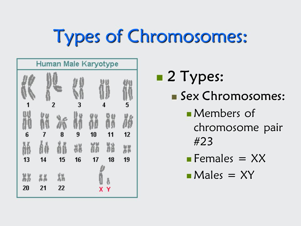 Types of Chromosomes: 2 Types: Sex Chromosomes: