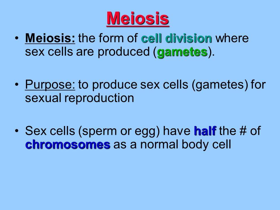 MEIOSIS. - ppt video online download