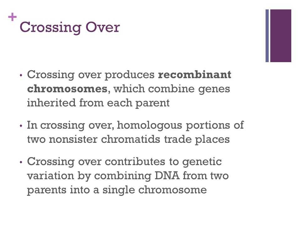 Crossing Over Crossing over produces recombinant chromosomes, which combine genes inherited from each parent.
