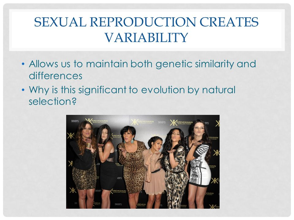 Sexual reproduction creates variability