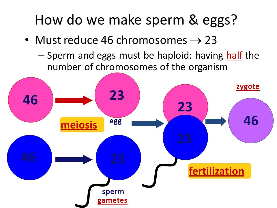 Background information for Sexual Reproduction - ppt download