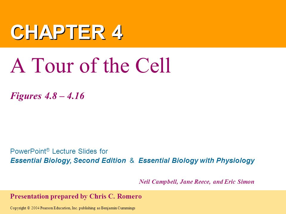 A Tour of the Cell Figures 4.8 – 4.16