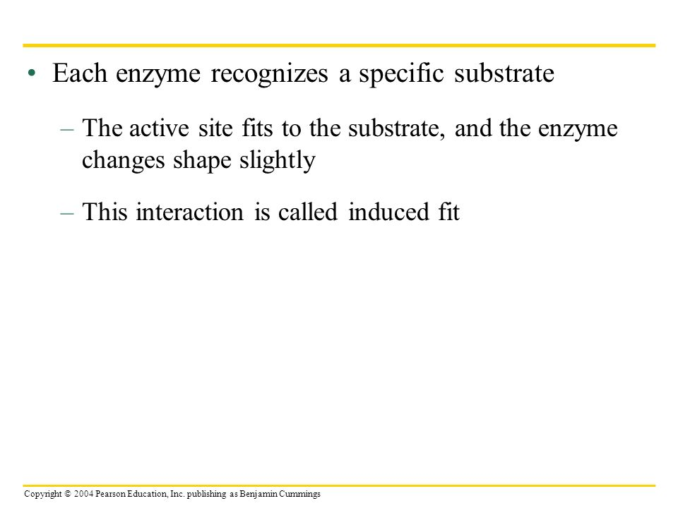 Each enzyme recognizes a specific substrate