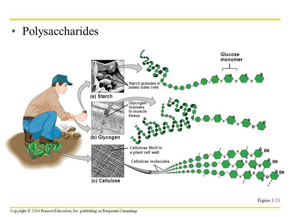 Polysaccharides Glucose monomer (a) Starch (b) Glycogen (c) Cellulose