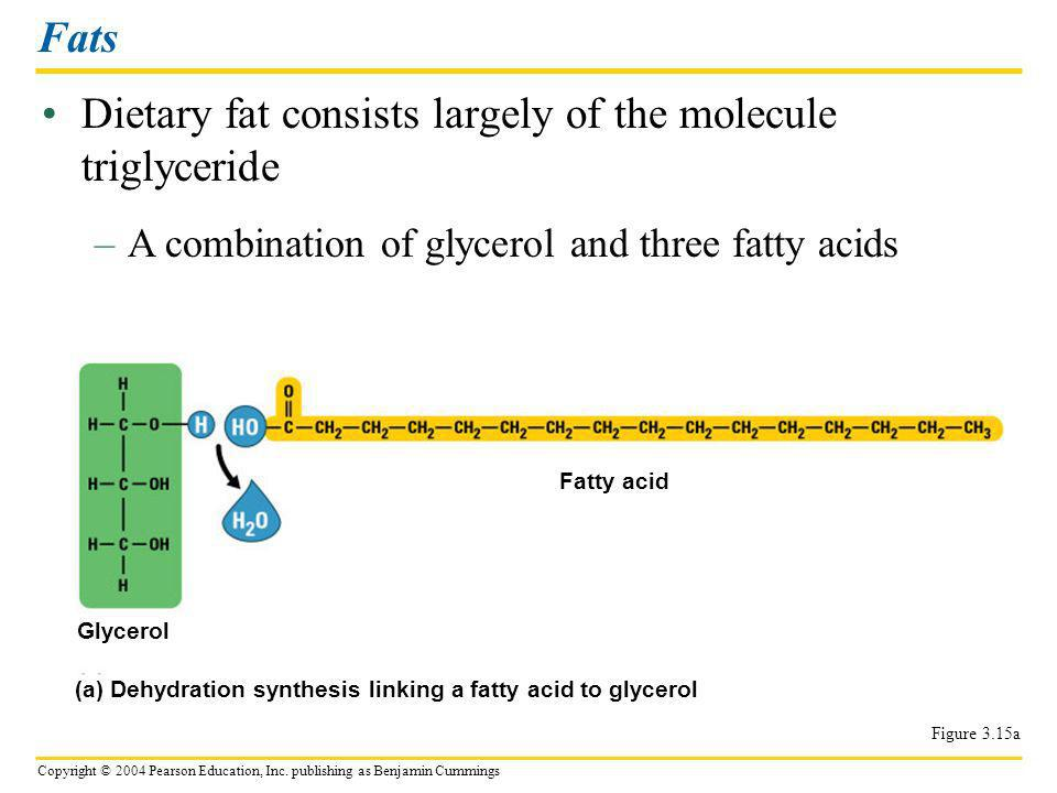 Dietary fat consists largely of the molecule triglyceride