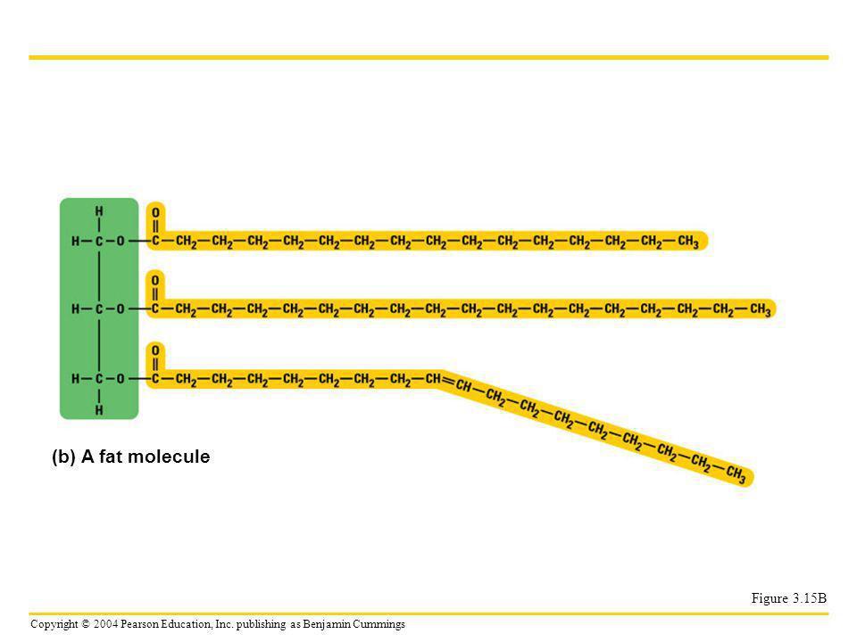 (b) A fat molecule Figure 3.15B
