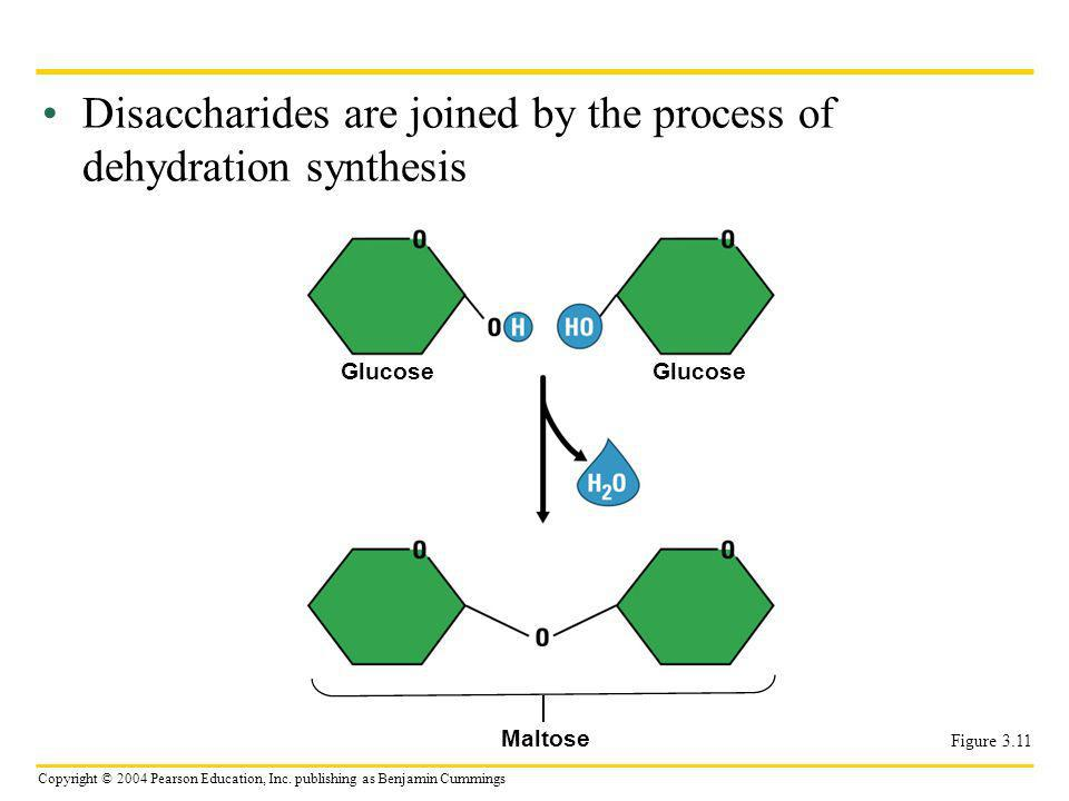 Disaccharides are joined by the process of dehydration synthesis