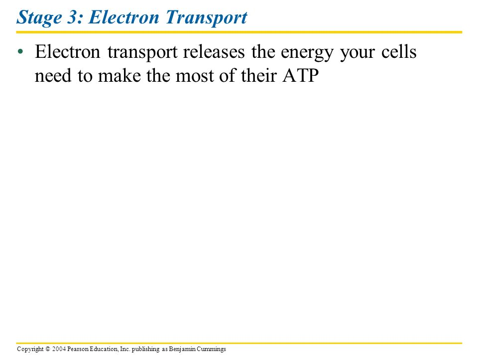 Stage 3: Electron Transport