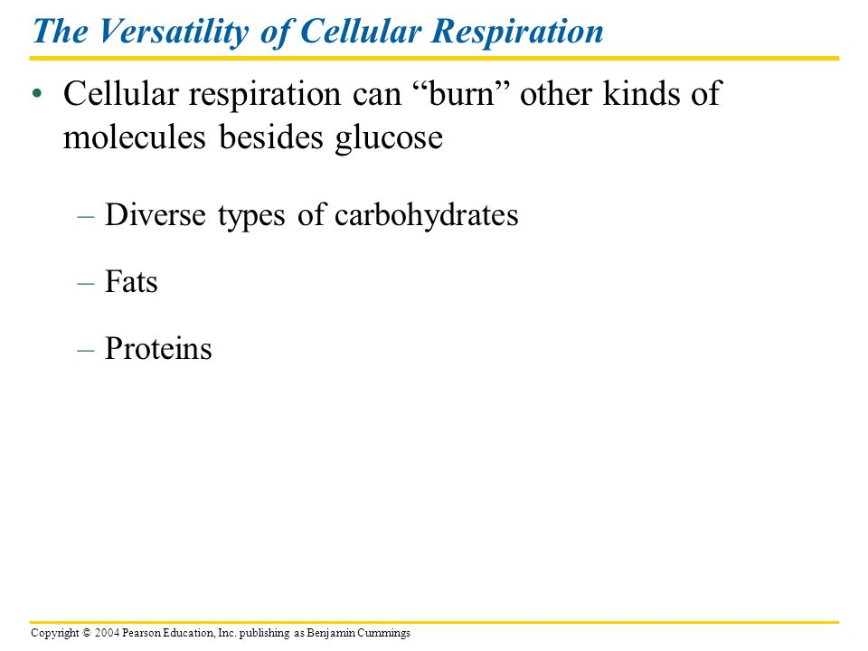 The Versatility of Cellular Respiration