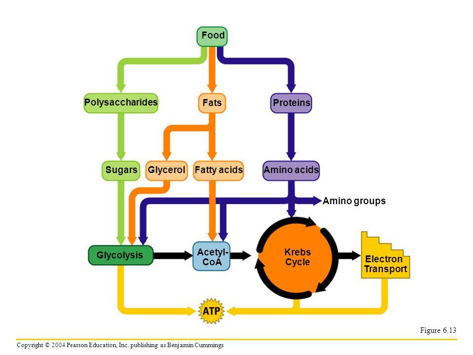 Food Polysaccharides Fats Proteins Sugars Glycerol Fatty acids